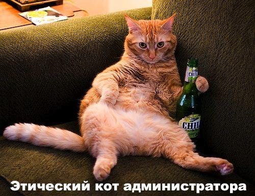 Этический кот администратора